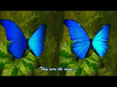 ♥Ƹ̵̡Ӝ̵̨̄Ʒ♥The Story Of Twin Butterflies - Ernesto Nazareth - Confidencias