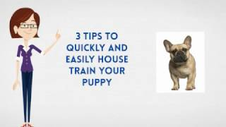 How To Potty Train A French Bull Dog Puppy |  House Train A French Bull Dog Fast