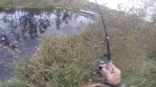 Ловля некрупной  щуки осенью 2016 с берега, видео rybachil.ru