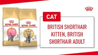 British Shorthair Kitten, British Shorthair Adult