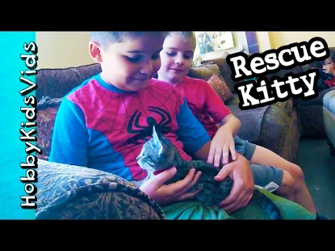 HobbyKids Adopt a Kitty! Cat Rescue Behind the Scenes by HobbyFamily HobbyKidsVids