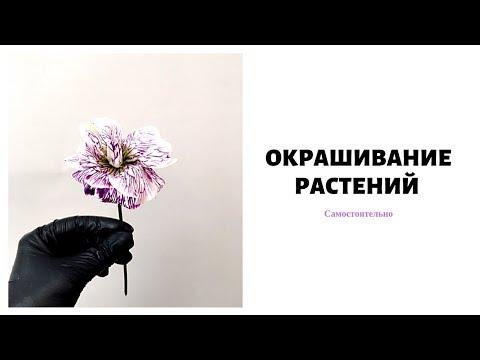 Как покрасить цветы // обучение флористике
