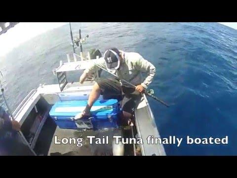 Sunshine Coast Pelagic Fishing