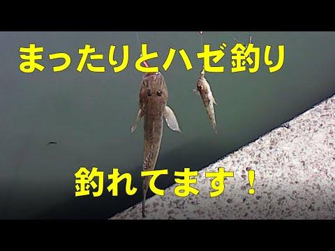 五目釣りを中心にしたひとりごと2