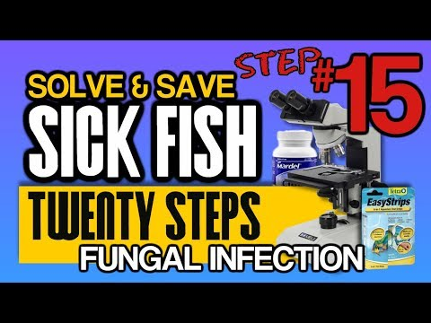 How To Diagnose And Cure Fish Fungal Infections: Step 15 Of 20