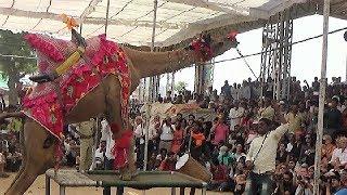 Beautiful Camel Dance - Camel Move   : Pushkar Mela Fair 2017: पुष्कर मेला , Rajasthan