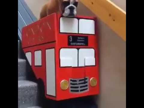 240x240 Joe Bloggs on Twitter Takin the bus 🚌 httpst coyhRiKBnqq6