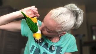 bonding-with-a-black-headed-caique-through-trick-training