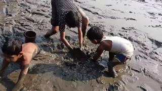 Fish Catching from mud water pond Bangladeshi village people