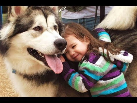 Adorable Alaskan Malamute playing with kids Amaizng Video ! Dogs With babies