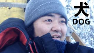 We try a dog sledding in Yukon. It was very fast. I was surprised. ...