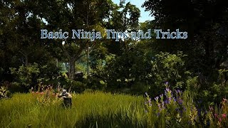 Basic Ninja Tips and Tricks in Black Desert Online