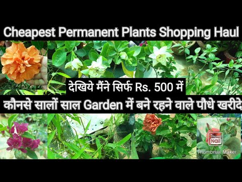 Cheapest Permanent Plants Shopping Haul in April 2021 with name, देखिये सिर्फ Rs.500 में पौधे खरीदे