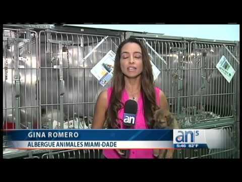 Nueva Aplicación Ayudará A Los Dueños Encontrar A Sus Mascotas Perdidas - América TeVé