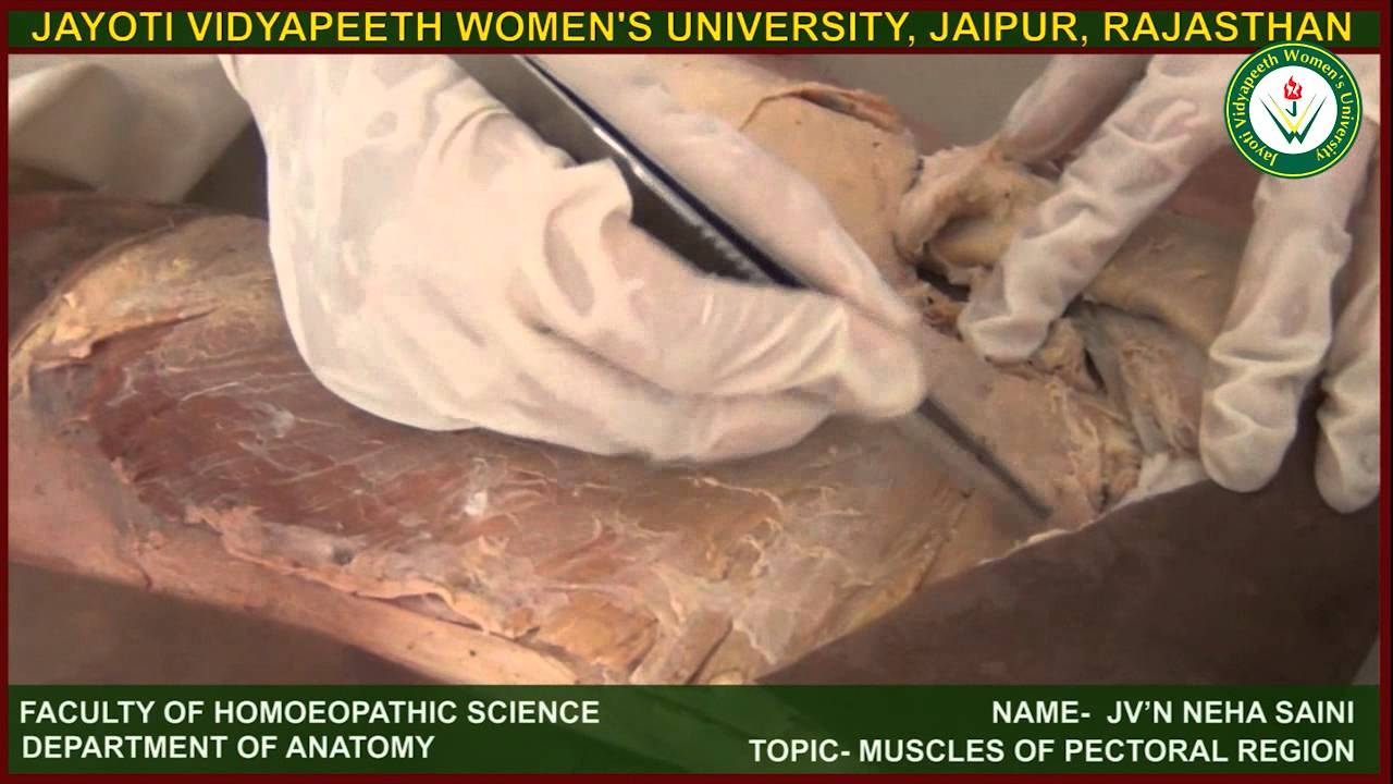 Dissection of Pectoral Region at JVWU by Dr Neha Saini - YouTube