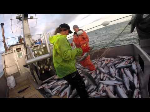Commercial Fishing: Bristol Bay Alaska