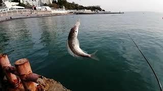 Рыбалка в Сочи Осенний окунь смарида