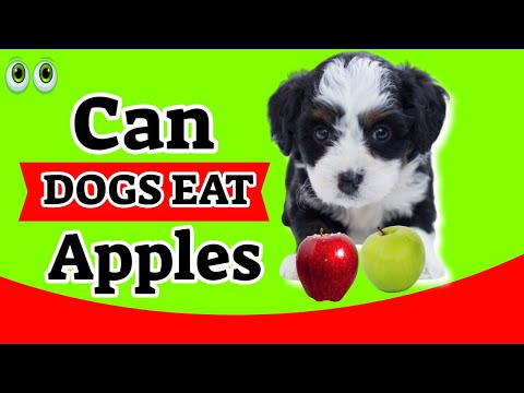 can-dogs-eat-apples?