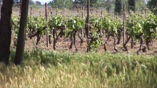 Vidéo de présentation du Château du Grand Caumont - réalisation agence 22h43