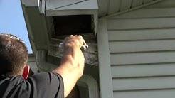 Bird Removal & Bird Control