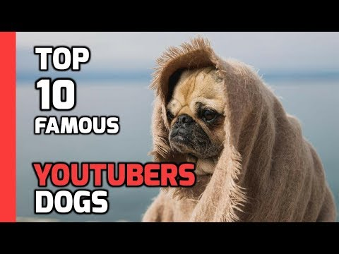 Top 10 famous YouTubers Dogs