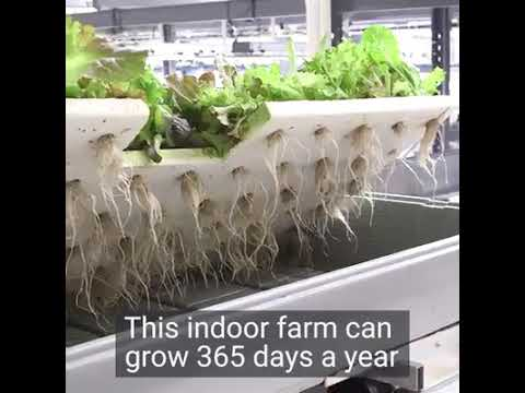 This farm in New Jersey grows food 365 days a year.