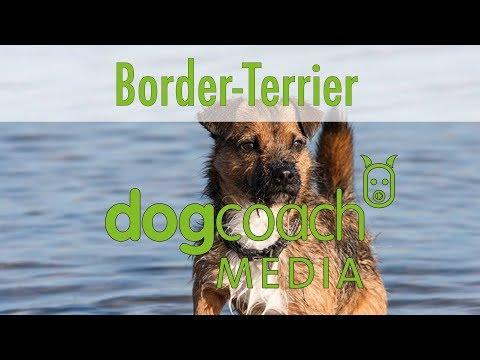 Hunderasse Lexikon - Border Terrier