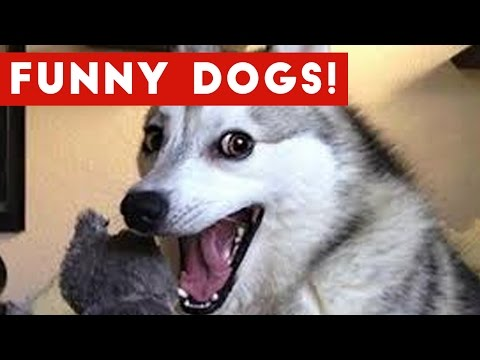Funny Dogs Compilation 2017 | Best Funny Dog Videos Ever