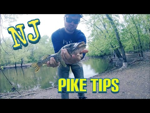 PIKE Fishing The PASSAIC River  !