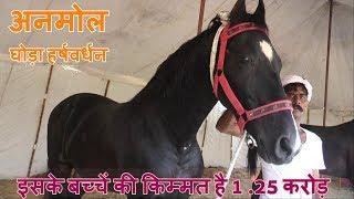 Pushkar Mela 2018..बाबा की अश्वशाला में हैं करोड़ो के घोड़े..Marwadi Horse.. Million Doller Horse