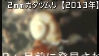 2013年【日本で新種の生物発見】徳島にて。