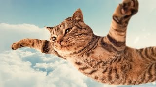 Кошка чуть не упала с 8-го этажа)))