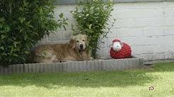Urlaub mit Hund in Carolinensiel