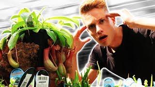 Diese Pflanze frisst FLEISCH