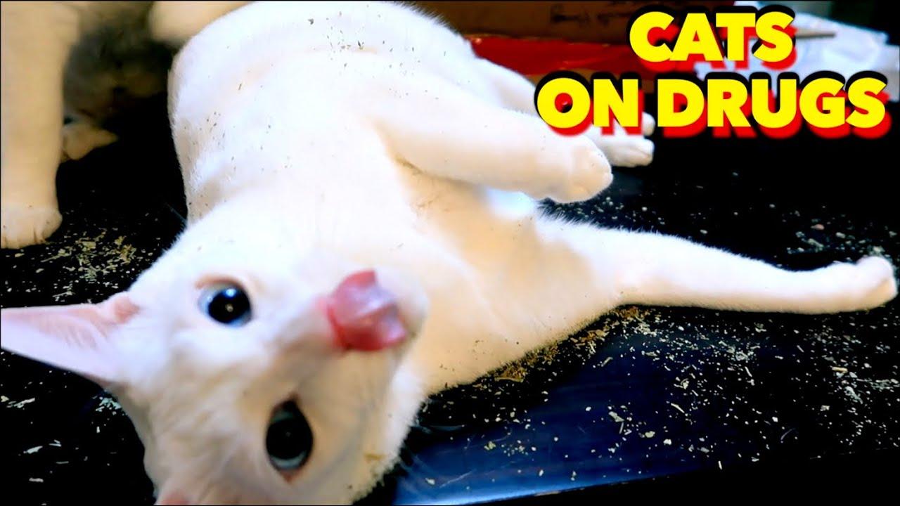 My HYPER Cat is Addicted to CATNIP~