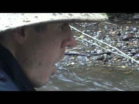 Small River Fishing In Western Washington