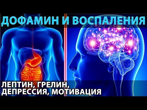 Дофамин и воспаления (а также лептин, грелин, мотивация, депрессия, питание и голодание)