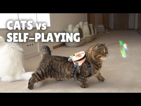 Cats vs Self-Playing