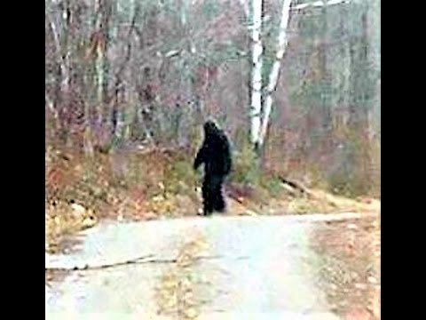 BIGFOOT IN WESTERN NY