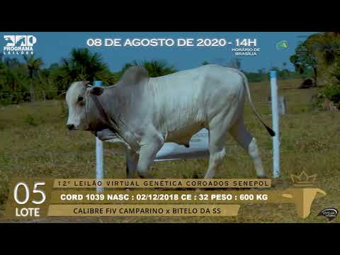 LOTE 05 CORD 1039