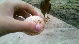 как из яйца сделать попрыгунчик в домашних условиях часть №2