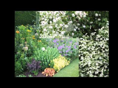Хрен фото выращивание и польза Сайт о саде, даче и
