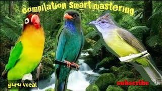 Download Mp3 Audio Smart Mastering Burung Lovebird, Tengkek Buto, Dan Cucak Jenggot