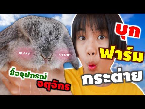 ซื้อกระต่ายตัวใหม่!!! เเวะซื้ออุปกรณ์กระต่ายที่จตุจักร