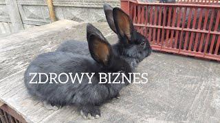 ZDROWY BIZNES - Czy króliki warto hodować na mięso ?