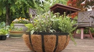Container Gardening Tips for Herbs
