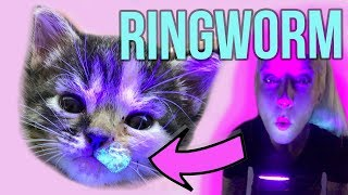 Helping Kittens with Ringworm!