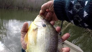 BIG SHELLCRACKER!!! Redear Sunfish Fishing With 1 lb Line and Worms