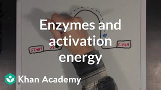 Enzymes and activation energy | Biomolecules | MCAT | Khan Academy