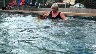 Warm Water Dog Swimming For Dogs & Their Owners
